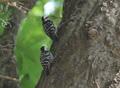 Chitwan Birds